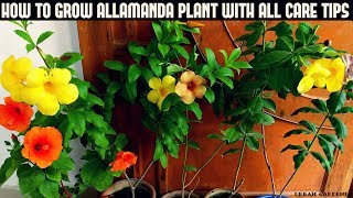 How To Grow Allamanda Plant With All Care Tips (Fast N Easy)