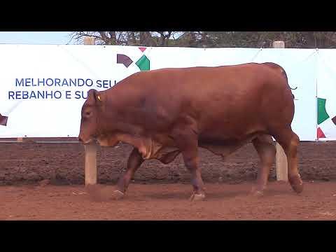 TOURO SENEPOL-SBD 57