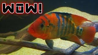 CRAIGSLIST FISH RESCUE OPERATION!