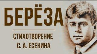«Береза» С. Есенин. Анализ стихотворения