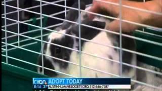 Austin Humane Society Bunny: Pickles