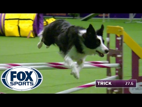 low country dog agility club - debbiebissett.com