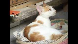 """my little cat """"kachong"""""""