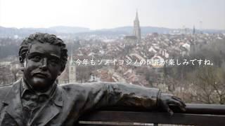 ベルンのソメイヨシノ開花情報 つぼみ編 2018.04.03【スイス情報.com】
