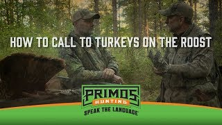 Calling Turkeys off the Roost