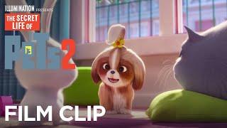 The Secret Life Of Pets 2   Clip: Help - Now on 4K, Blu-ray, DVD & Digital   Illumination