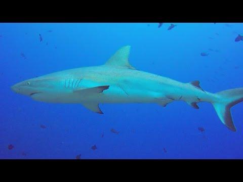 Scuba Diving in Palau, Palau allgemein,Palau