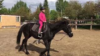 Training. Horse riding for a child. Olya on a horse named Walk