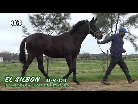 Lote EL SILBON