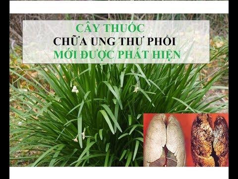 Bài thuốc chữa UNG THƯ PHỔI từ cây RAU HẸ | Cây Rau He CHỮA UNG THƯ