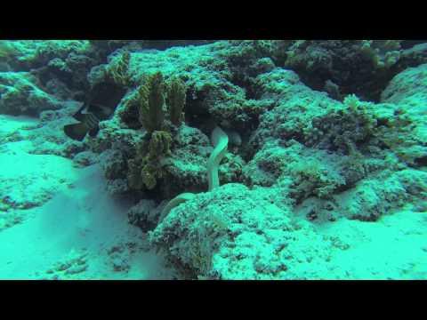 Mnemba Atoll - Tauchgang, Mnemba Atoll - Matemwe Beach,Tansania
