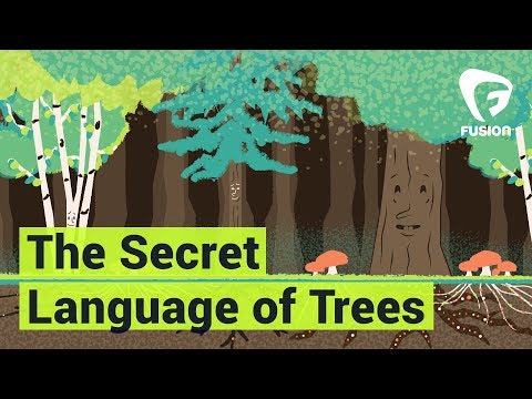 Trees Can Talk, We Just Can't Hear It