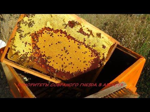 Нужна ли сборка пчелиного гнезда в августе???