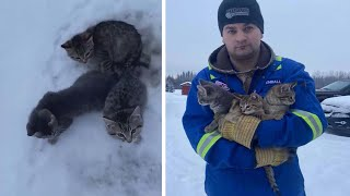 3 Kittens Saved From Freezing To Death After Man Pours Coffee On Them