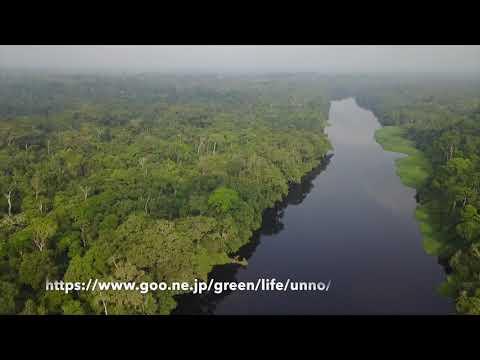 カメルーンのニョン川