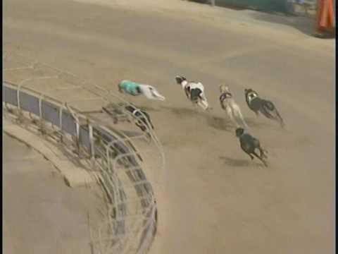 Race 17 BestBet Jacksonville Racing Stake