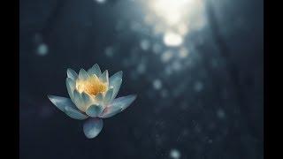 Elate Breath Meditation- Beginners Level 1