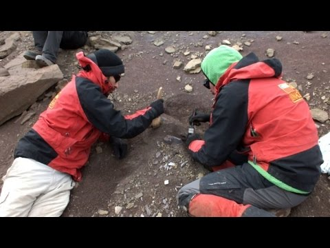 Scientists study extensive dinosaur site in Chilean Patagonia