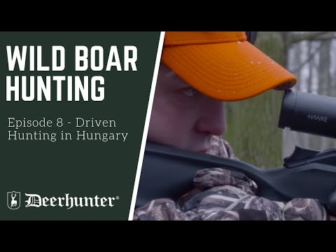 Driven Hunting in Hungary