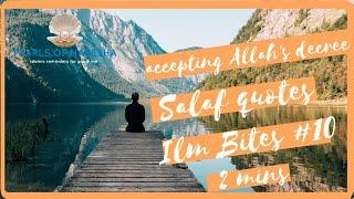 accepting Allah's decree | salaf quotes| Ilm bites #10 | whatsapp status| Islamic status