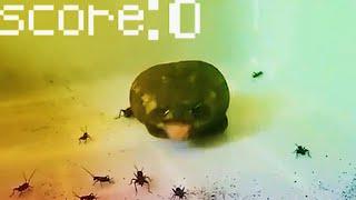 Beeg Beeg Yoshi Eats Crickets