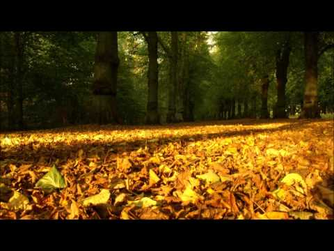 TUNE: Estiva - Lifting Leaves