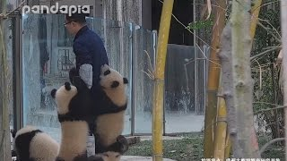 """The """"poorest"""" panda keeper"""
