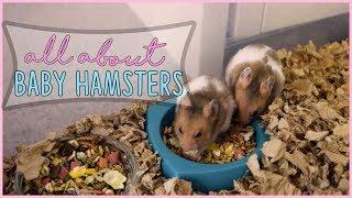 syrian hamster babies - मुफ्त ऑनलाइन वीडियो