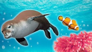 Ocean Animals for Kids - Whales, Sea Otter, Orca, Sea Lion + more
