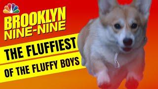 Cheddar Holt-Cozner: One Good Boy! - Brooklyn Nine-Nine