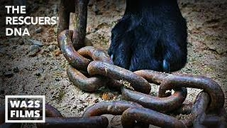 Dogs on Heavy Chain Until Stray Dog Rescue Saves All Puppies - Hope For Dogs | My DoDo