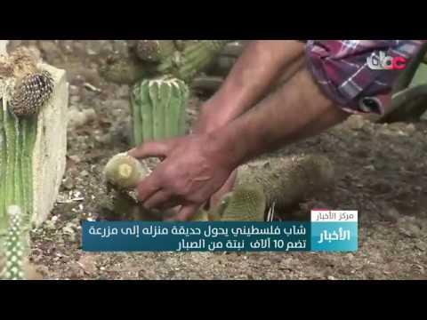 العرب اليوم - شاهد: فلسطيني يحول حديقة منزله إلى مزرعة تضم 10 آلاف نبتة صبّار