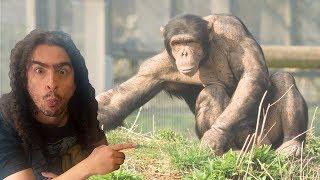 Humanos e chimpanzés podem ter filhos híbridos? (#Pirula 315)