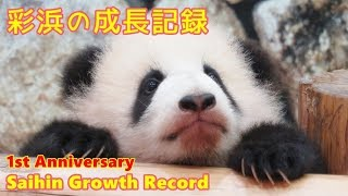 彩浜の成長記録 1st Anniversary Saihin Growth Record