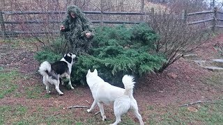 Ghillie Suit Hide and Seek with My Dogs 2