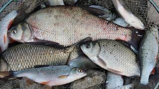 Рыбалка урала отчеты