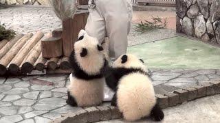 【あそんで~ッ♪】パンダの桜浜&桃浜☆お掃除おじゃま虫♪ Giant panda baby -Ouhin&Touhin-