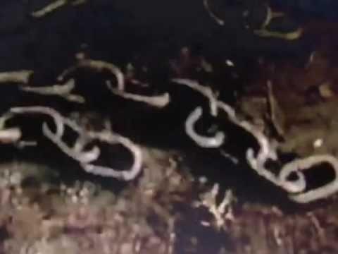 Dan's Band Isle of Dogs Video.