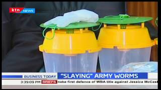 Relief for farmers as government disburses pheromone traps to trap army worms