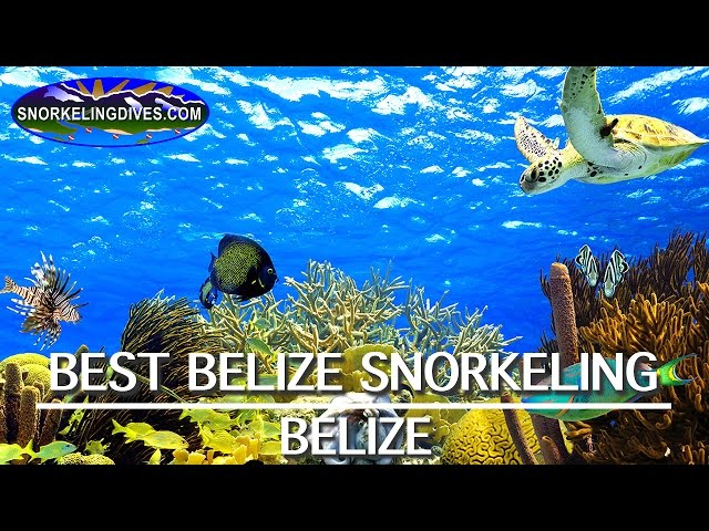 Best Belize Snorkeling