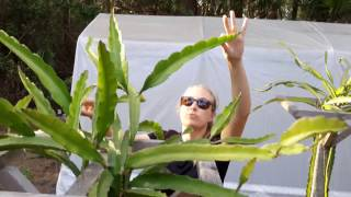 How to grow Dragon Fruit in SWFL ( part 7 )
