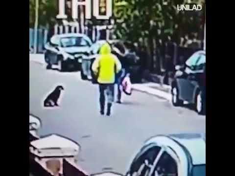 VIDEO DE PERRO QUE FRUSTRA ASALTO SE VUELVE TENDENCIA MUNDIAL