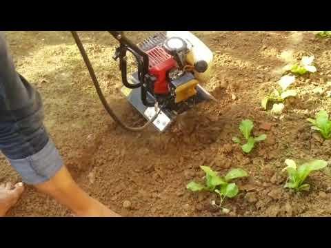 Petrol Mini Inter Cultivator