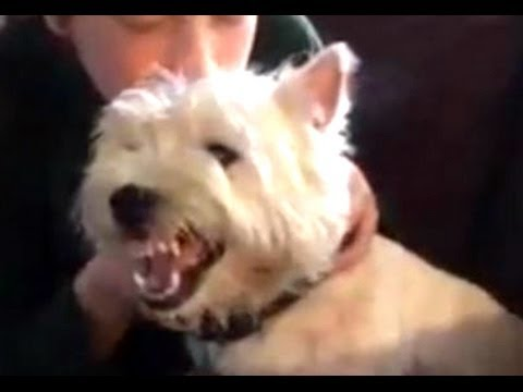 Funny Angry Dogs Barking And Growling Compilation 2014 – Dog Barking Videos