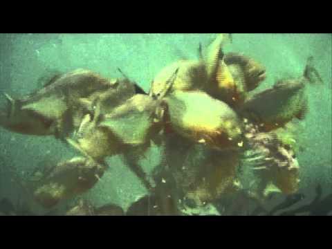 世界上最恐怖的一群小魚...