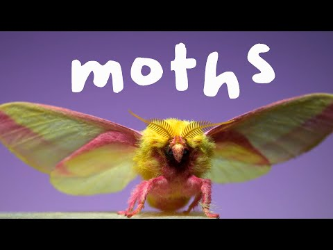 This Will Make You Appreciate Moths In a New Way