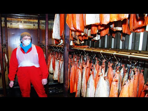 Aquaculture of salmon - Farming and harvesting of salmon - Smoked Salmon Processing