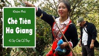 Chè Tiên Hà Giang – Kí Sự Chè Cổ Thụ – Tập 2