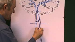 Brain 6, Nerve pathways
