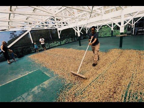 Farming OFF GRID - Hawaiian Coffee SPECIAL